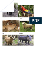 Animales Del Picacho