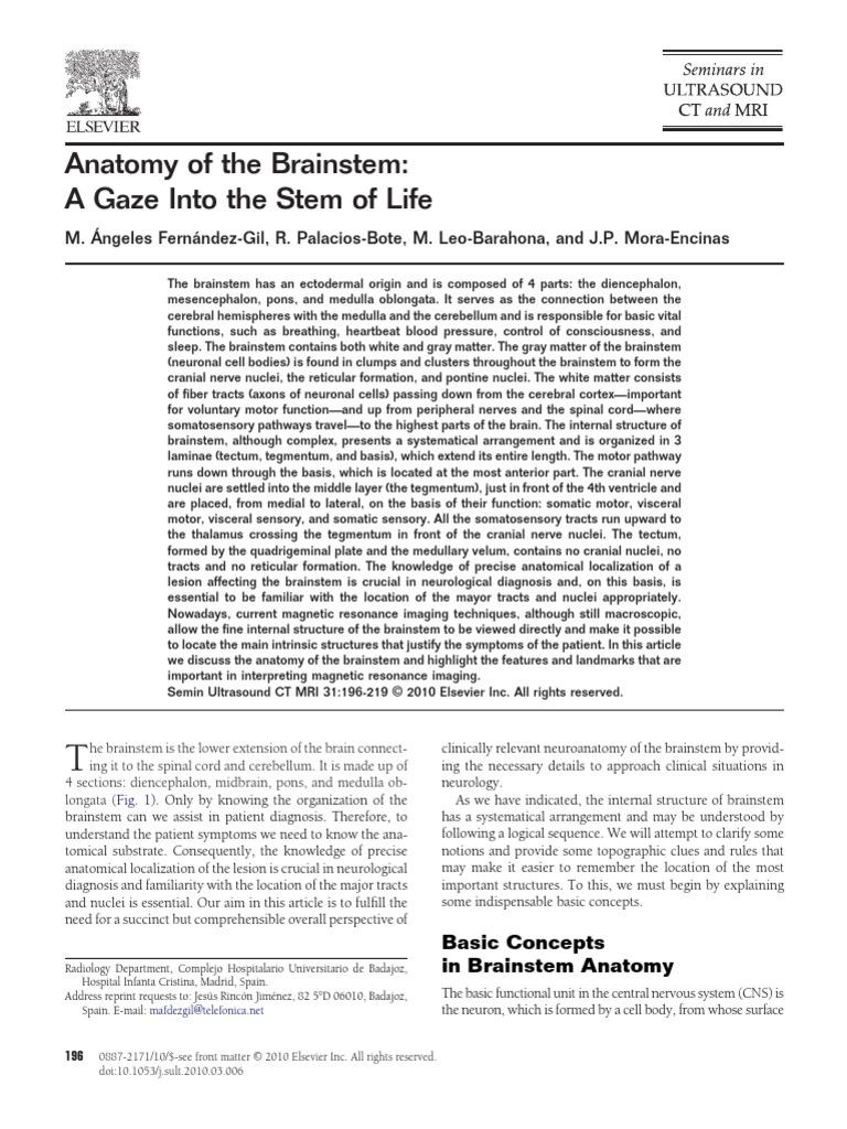 Anatomia Del Tallo | Brainstem | Spinal Cord