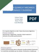Digestion Quimica y Mecanica en Estomago y Duodeno