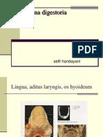 Anatomi s Digest