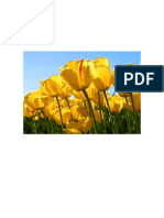 Nuevo Documento de Microsoft Word qe2