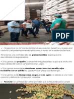 analisis de cafe 2018 [Autoguardado].pptx
