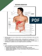 CLASE 8 Anatomia