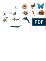 animales(cuadrupedos, setaceos,etc)