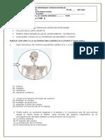 Prueba de Ciencias Naturales de 4º Los Huesos
