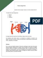 Trabajo Escrito de Anatomia