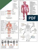 Respon Otot dan Sendi.docx