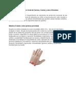 Guantes para Corte de Cecinas.doc