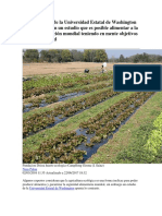 Investigadores de La Universidad Estatal de Washington Han Concluido en Un Estudio Que Es Posible Alimentar a La Creciente Población Mundial Teniendo en Mente Objetivos de Sostenibilidad