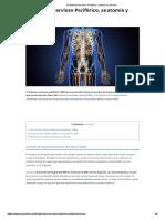 El Sistema Nervioso Periférico, Anatomía y Función