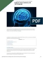 La Corteza Cerebral_ Áreas Motoras, De Asociación y Del Lenguaje