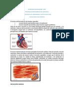 Guia Teorica de Fisiologia Cardiaca