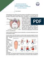Guia Teorica Embriologia