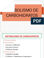 Catabolismo de Carbohidratos