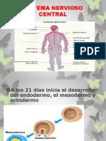 1.2.-DESARRROLLOEMBRIONARIOSN