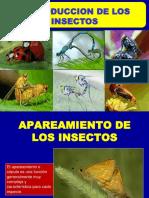 3 y 4. Reproduccion de Insectos