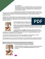 Resumo sobre Pelve e Perineo Aula de Anatomia - Ossos e Músculos