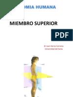 Anatomia Miembro Superior Uns