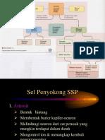Sistem Saraf (2)