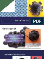 Anatomia uvea.agosto2018.MR2.Flor.Arenas.INO.pdf