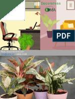 Catálogo Plantas Con Flor