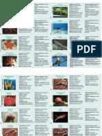 cartas_animais.pdf