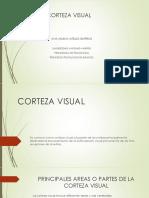 Corteza Visual