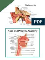 Anatomy Ear Nose Throat
