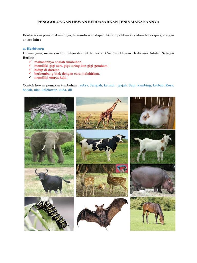 61 Gambar Hewan Dan Jenis Makanannya HD Terbaru