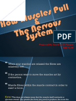 How Muscles Pull &The Nervous System