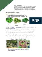 plantas 4444.docx