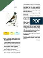 Fringuello-alpino