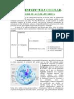 MORFOLOGIA+CELULAR.pdf