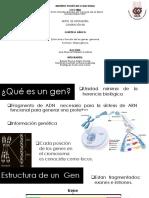 Estructura y Función de Los Genes Genoma