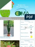 Catálogo Plantas Decorativas