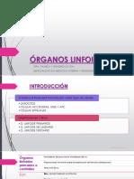 3. ÓRGANOS LINFOIDES