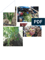 enfermedades de la 10.pdf