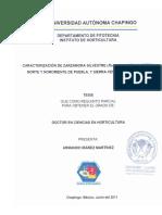 TESISDCH2011060806126365.pdf