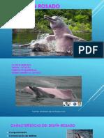 Delfin Rosado Terminado
