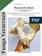 Macrocybe titans FUNGA VERACRUZANA 168