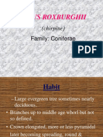 Pinus Roxburghii - Siddharth