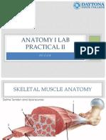 64 Anatomy I Lab Practical II Review Presentation