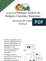 8 Pedigree2 y Cariotipo
