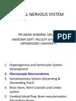 Macroscopic Anatomi 2