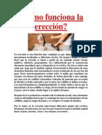 Cómo Funciona La Erección PDF GRATIS.