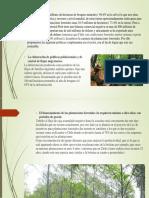 Sector Forestal Tavera