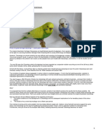 how_to_breed_the_clearwing_budgerigar.pdf