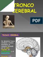 Tronco Cerebral - Anatomía