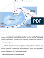 Cephelerin Özellikleri ve Cephelerin Sınıflandırılması | Coğrafya Bilimi.pdf