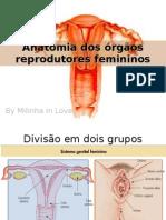 Anatomia dos órgãos reprodutores femininos